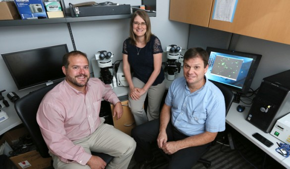 Craig Duvall, Ph.D., left, Julie Sterling, Ph.D., and Scott Guelcher, Ph.D., are collaborating on nanoparticle research for use in bone cancer. (photo by Anne Rayner)